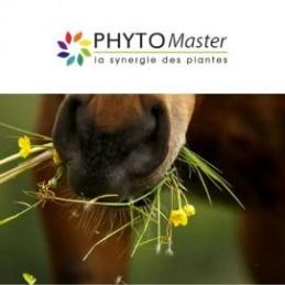PHYTO MASTER DRAINEUR (système hépatique et rénal)